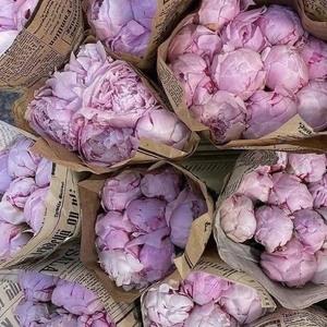 Bonne soirée les nanas ✨🌸  #inspiration #pinterest #flowers